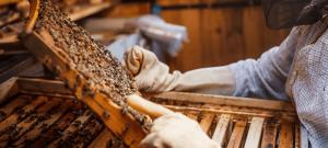 BuzzBalm Beekeepers