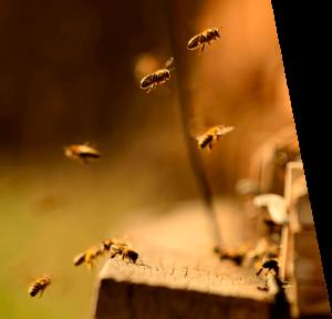 BuzzBalm Bees 2
