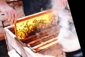 BuzzBalm Beekeepers 2