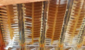 Buzzbalm flow hive
